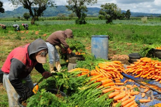 Por un modelo de producción rural inclusivo